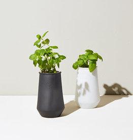 Modern Sprout Black Planter, Mint