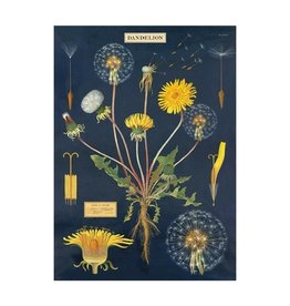 Cavallini Papers Dandelion Chart Wrap Sheet 20x28