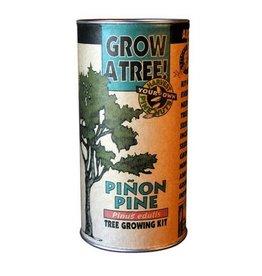 Jonsteen Pinion Pine Grow Kit
