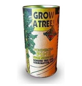 Jonsteen Ponderosa Pine Grow Kit