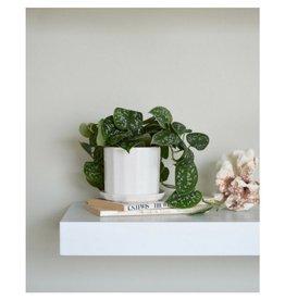 Convivial Mini Riveted Planter