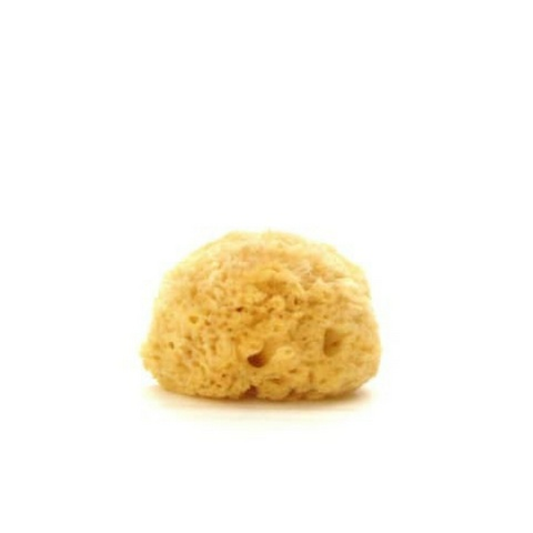 CeeCee & Bee Sea Sponge