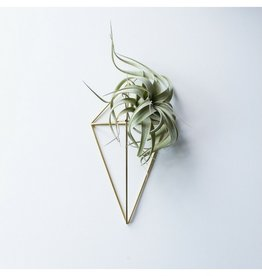 Hemleva Wall Sconce Air Plant Holder