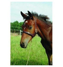 Foal Slip Halter