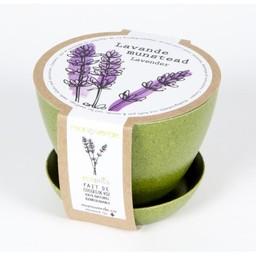 Mano Verde Mano Verde - Minipot Kit, Lavender