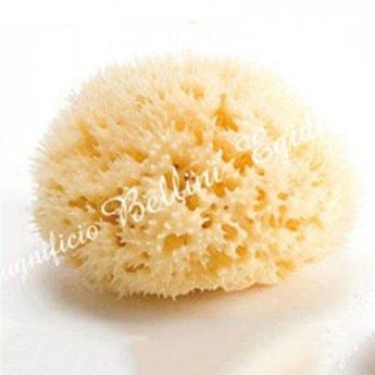Bellini Bellini - Éponge de Mer Naturelle Honeycomb/Honeycomb Natural Sea Sponge, Moyenne/Medium