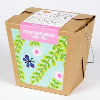 Mano Verde Mano Verde - Junior Garden Box, Ticklish Plant