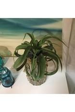 ARTIFICIAL AIR PLANT