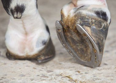 Hoof Care & Poultice