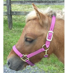 Intrepid Adjustable Mini Nylon Halter