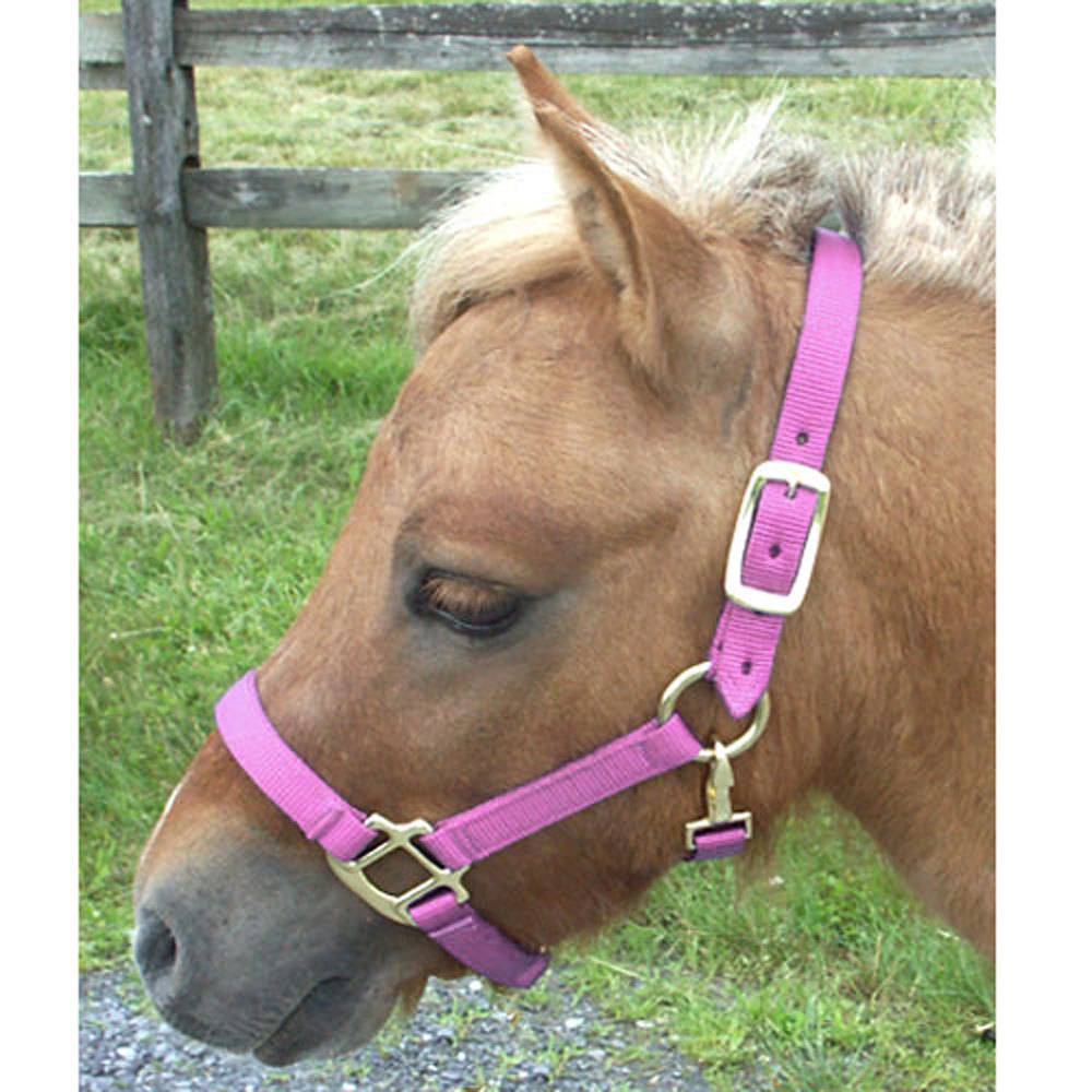 745dd6400e6d Intrepid Adjustable Mini Nylon Halter - Gass Horse Supply   Western Wear