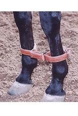 Circle L Circle L Leather Training Hobble, L.Oil - Horse Size