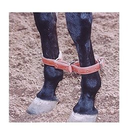 Circle L Circle L Leather Training Hobble, L.Oil - Horse Size