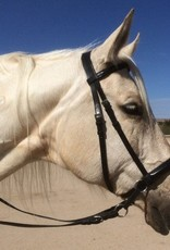Dr. Cook Dr. Cook English Bitless Bridle - Leather