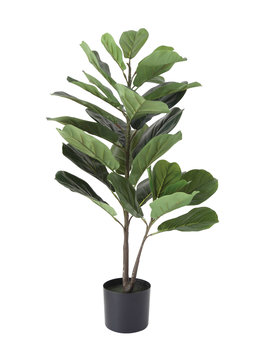 Creative Co-op Faux Fiddle Fig Leaf Plant in Pot