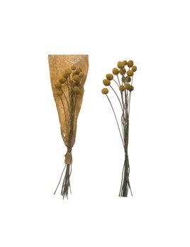 Creative Co-op Dried Natural Craspedia Bunch - Yellow