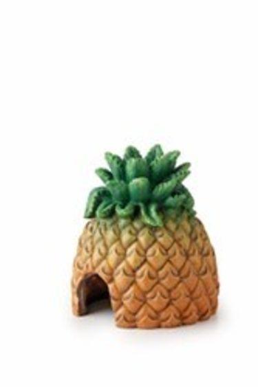 Exoterra Cachette en forme d'anana