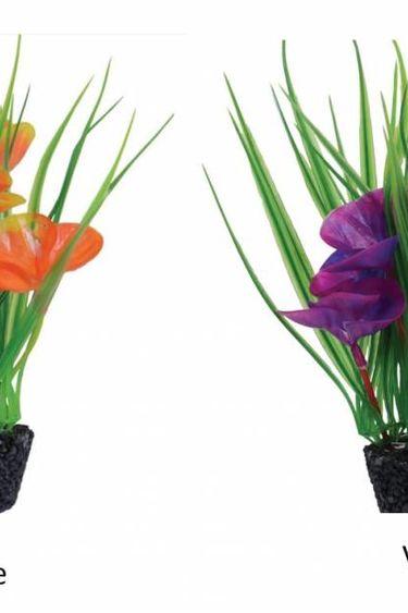 Treasures underwater Plante luna lily 7 po