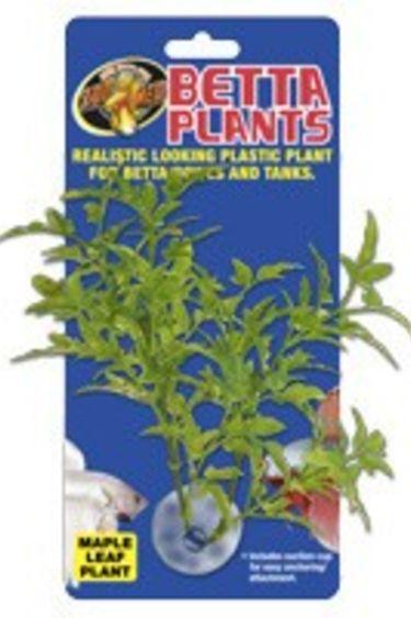 Zoomed Plante à Betta feuilles d'érable/Betta Plants™ – Maple Leaf
