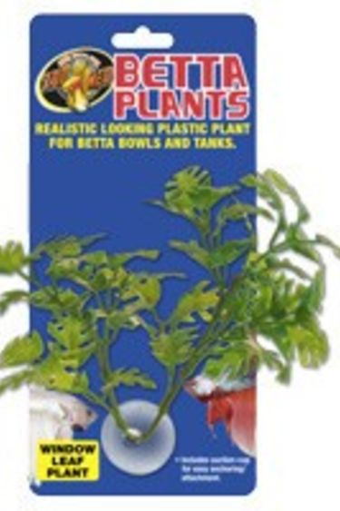 Zoomed Plante à betta feuilles de fenetre/Betta Plants™ – Window Leaf