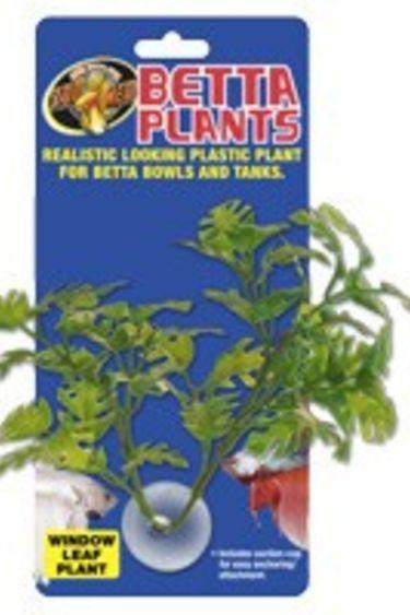 Zoomed Plante à betta feuilles de fenetre
