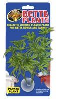 Zoomed Plante a Betta Papaye Betta Plants - Papaya