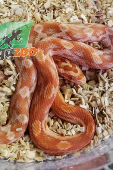 Magazoo Serpent des Blés Sunglow Bébé