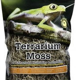 Galapagos Mousse Espagnole - Spanish Moss