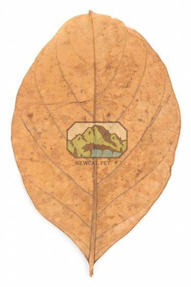 NewCal Pets Feuille de jacquier pq de 10 - Jack Fruit Leaves