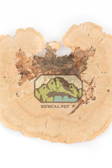 NewCal Pets Champignon éponge pq de 2 - Ponge Mushroom