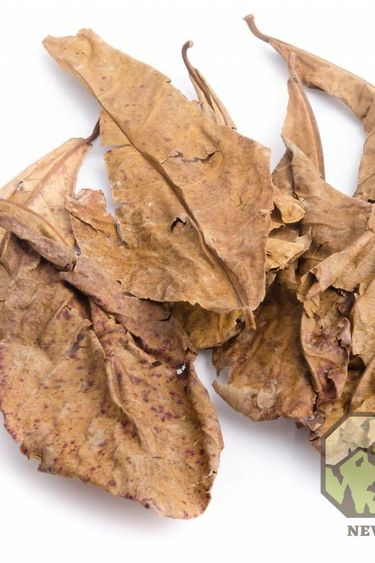 NewCal Pets Feuille d'amandes indiennes Grade B - Indian Almond Leaves