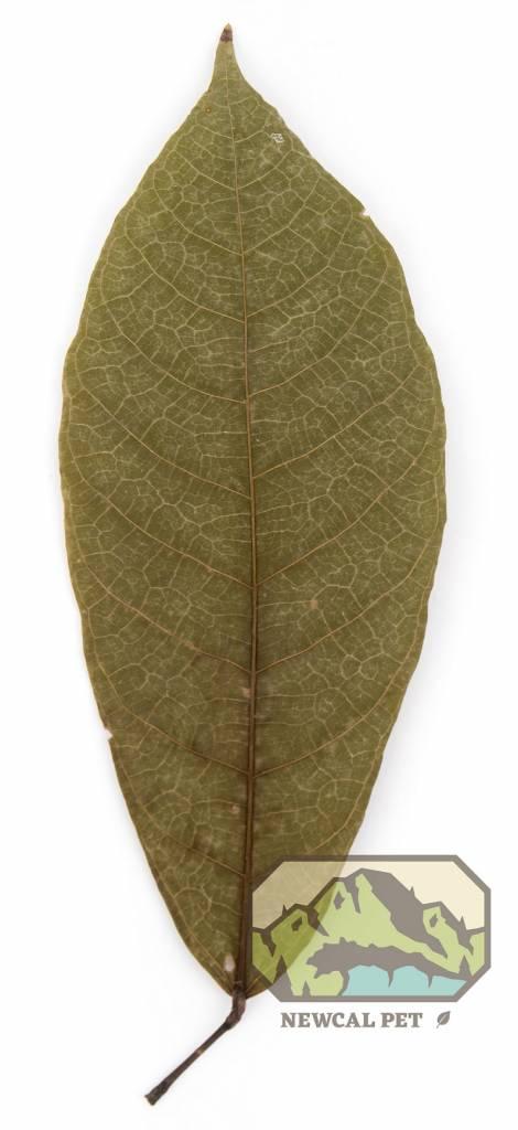 NewCal Pets Feuilles de cocoa pq de 10 - Coco Leaves