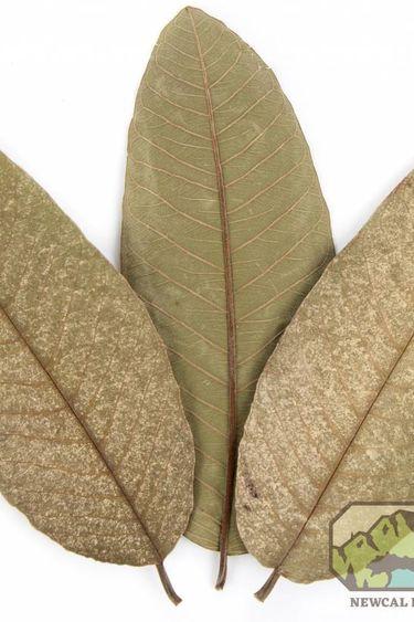 NewCal Pets Feuilles de goyave pq de 10 - Guava Leaves