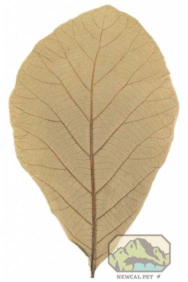 NewCal Pets Feuilles de teck pq de 10 - Teak Leaves