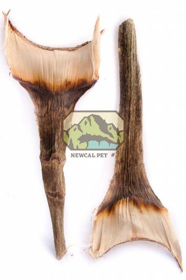 NewCal Pets Feuilles d'agave pq de 2 - Agave Leaf