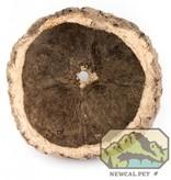 NewCal Pets Cosse de noix d'ouriço - Ourico Pod