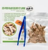ProBugs Larve de mouche soldat noire phoenix Eco-Fresh Black Soldier Fly Larvae