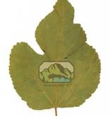 NewCal Pets Feuilles de mûrier pd de 10 - Mulberry Leaves
