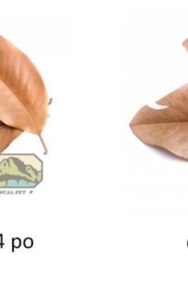 NewCal Pets Sac de feuilles de magnolia/Magnolia Leaf Litter