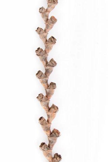 NewCal Pets Bâtons de buriti 16 po - Buriti stick