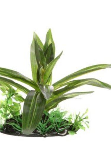 Fluval Sagittaire à feuilles larges , petit, 10 cm (4 po), avec base
