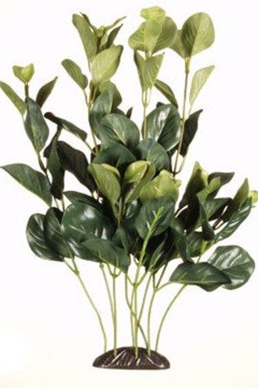 Marina Plante caroliniana 30 cm - EcoScap.Bacopa Caroliniana