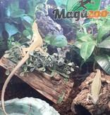 Magazoo Lacerta Vert de Balkan (Vendu en couple) prix pour le couple