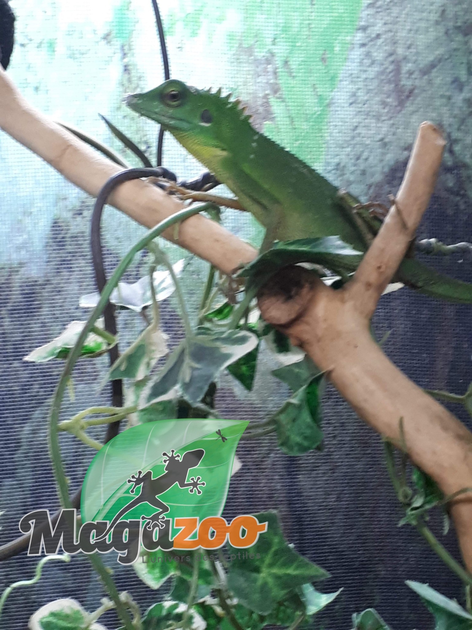 Magazoo Lézard à Crête Vert