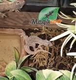 Magazoo Gecko des maisons