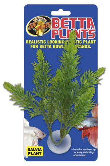 Zoomed Plante à Betta Salvia/Betta Plants™ – Salvia