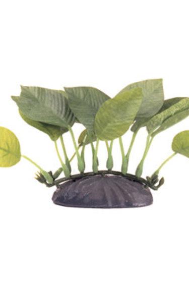 Marina Plante anubias nana - EcoScaper Anubias Nana 10cm-V