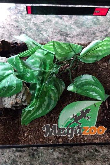 Magazoo Scorpion empereur + terrarium équipé
