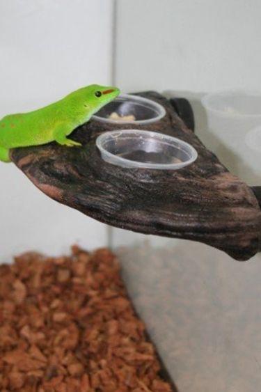 """MagNaturals Bol à gecko 9 X 4.75""""/Gecko Ledge"""