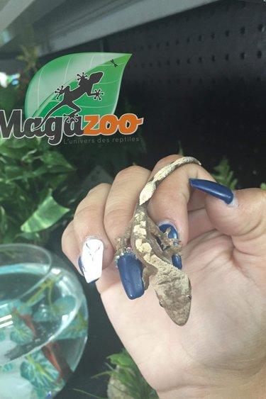 Magazoo Gecko à crête chevron (Bébé)